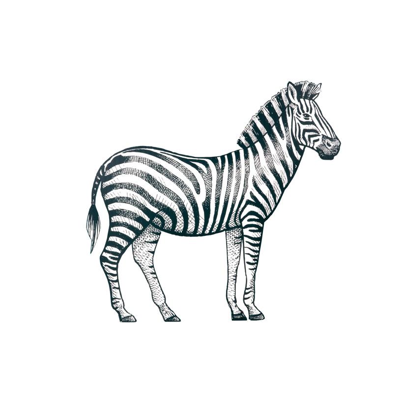 "Cut-Out ""Zebra"", 90x80cm Stütze rückseitig klappbar"