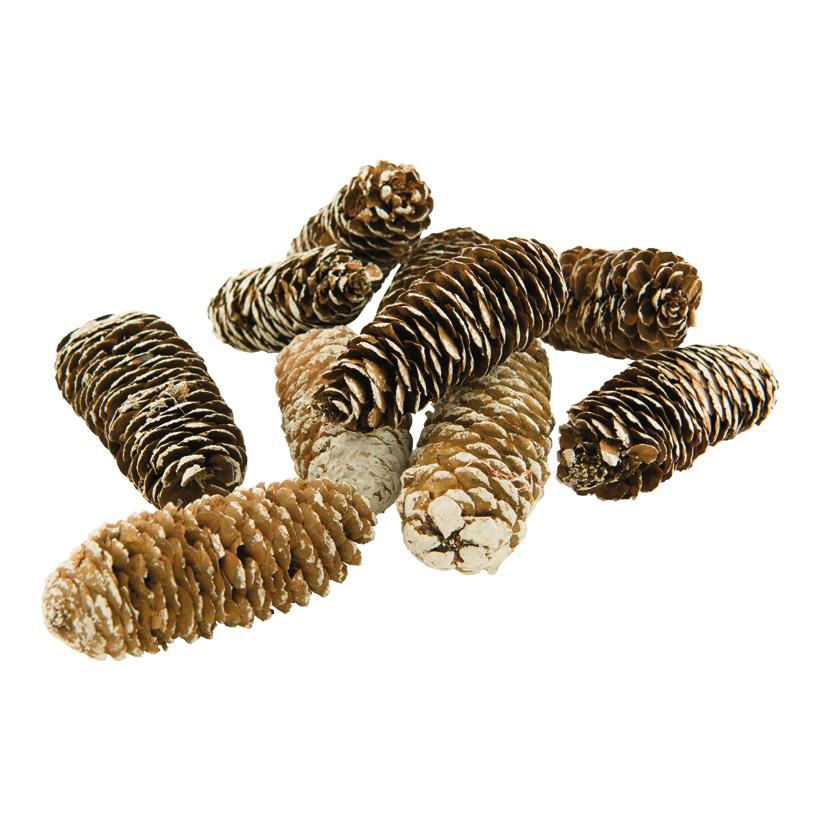 Tannenzapfen, ca. 8-10cm 10Stk./Btl., echte Zapfen, beschneit