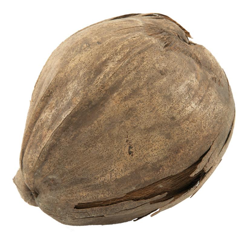 # Kokosnuss, echt, Ø10cm getrocknet, konserviertes Naturmaterial