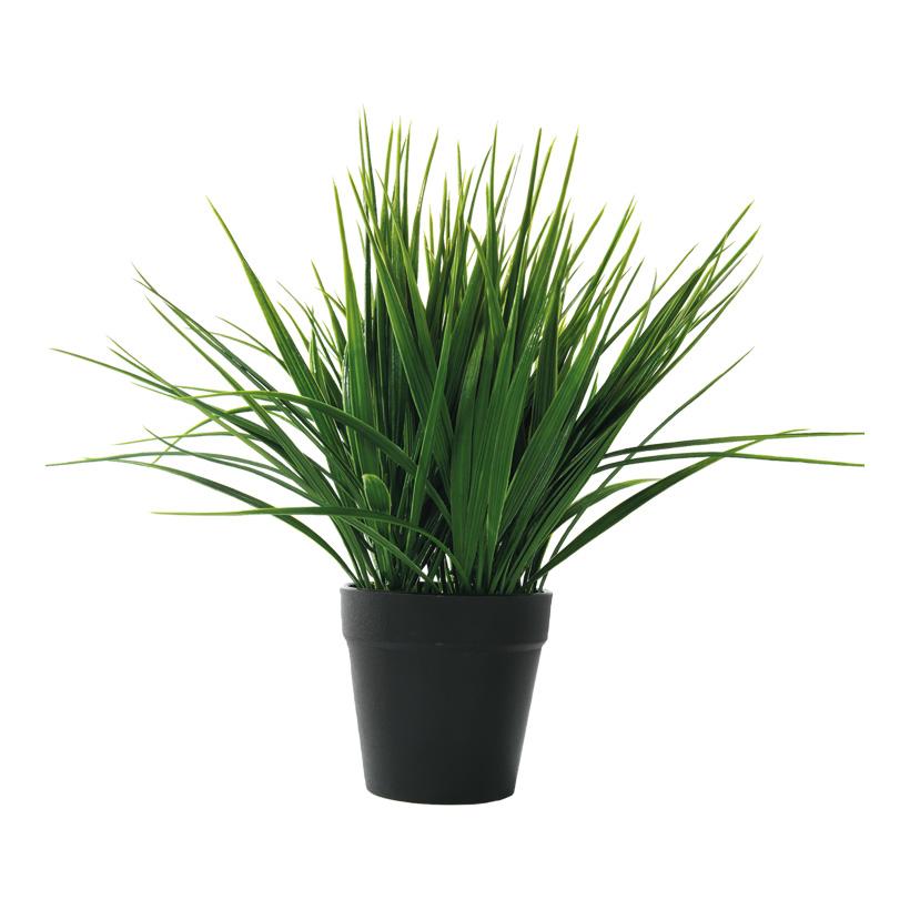 Gras im Topf, 28cm