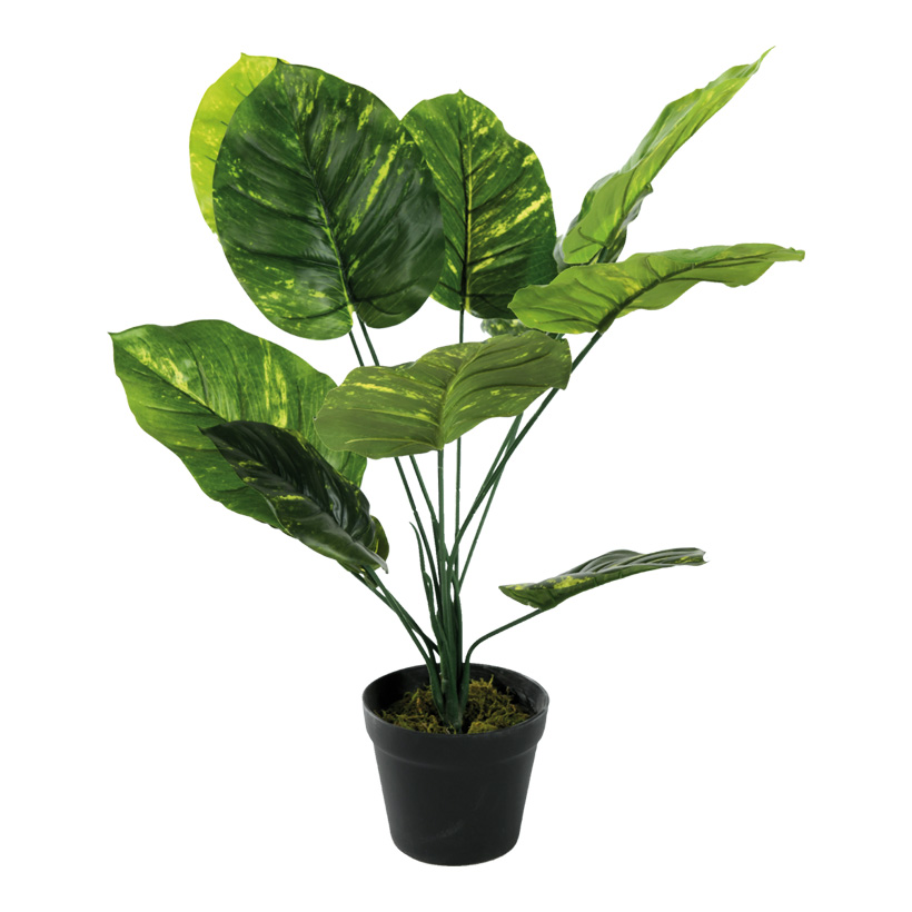 # Philodendron Pflanze, 60cm mit Kunststoff Topf