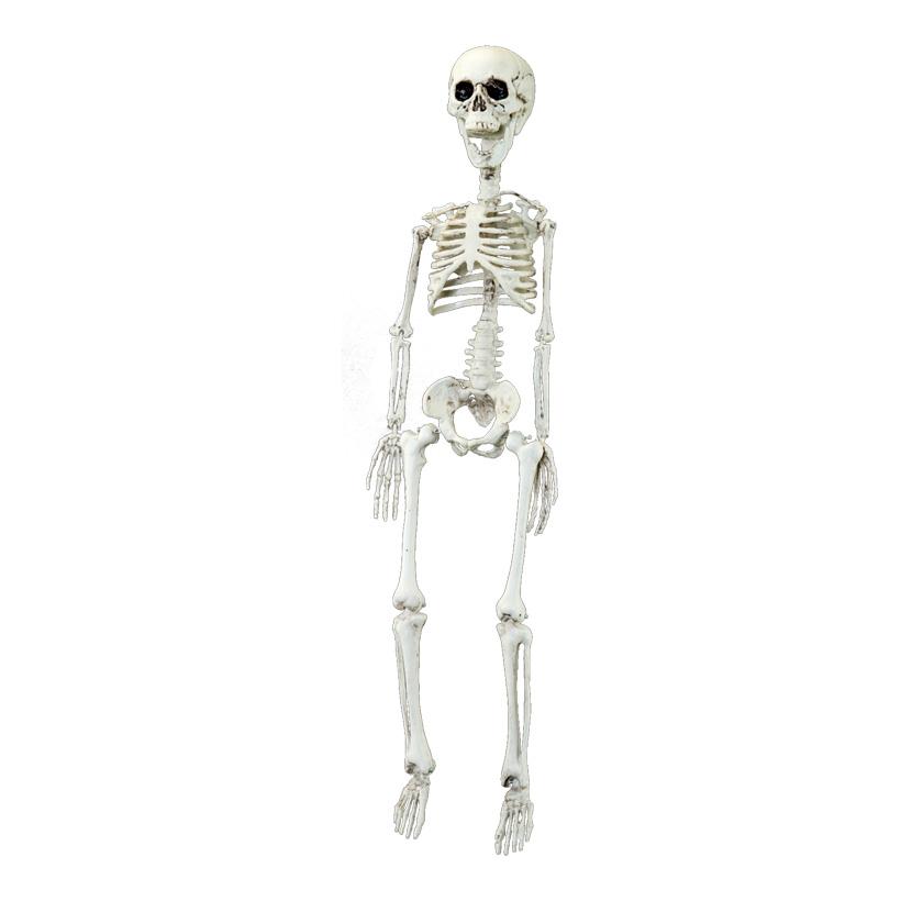 Skelett, 75cm zum Hängen, aus Kunststoff