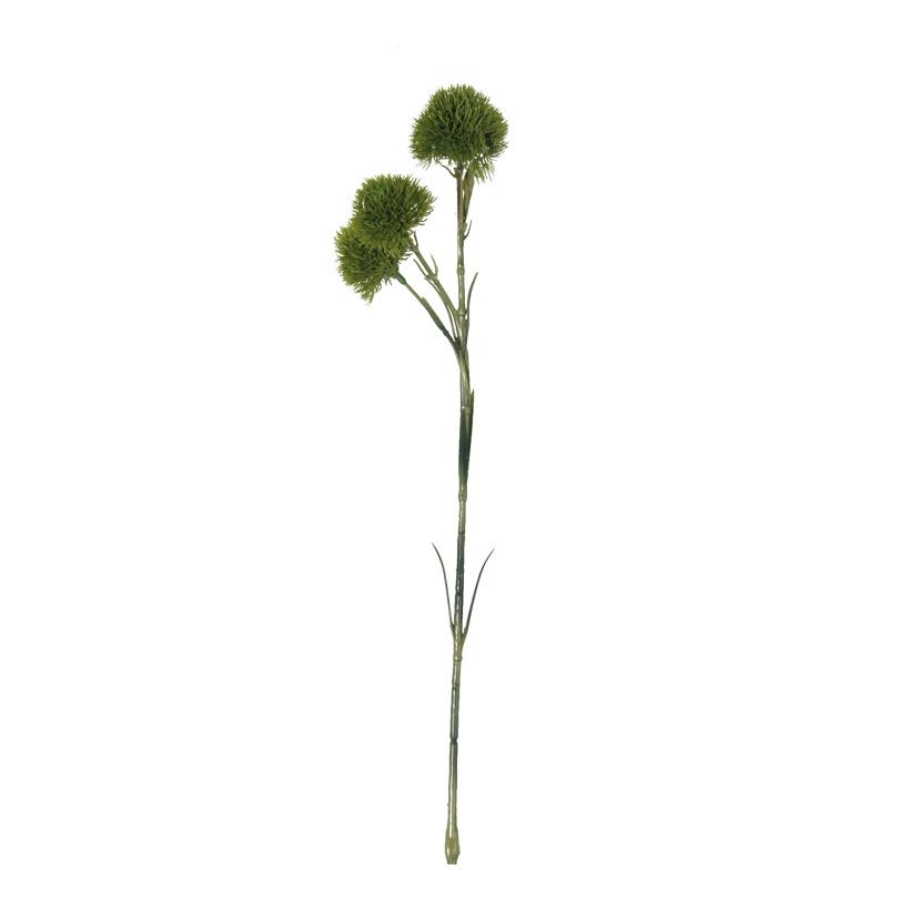 Alliumendolde, 60cm