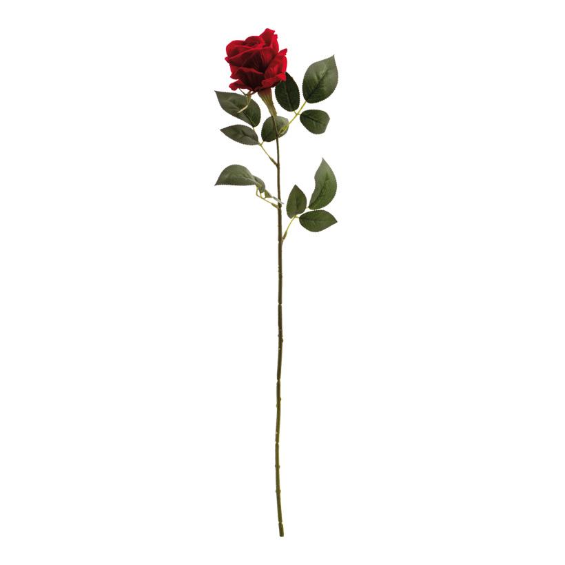 Rose, 65cm
