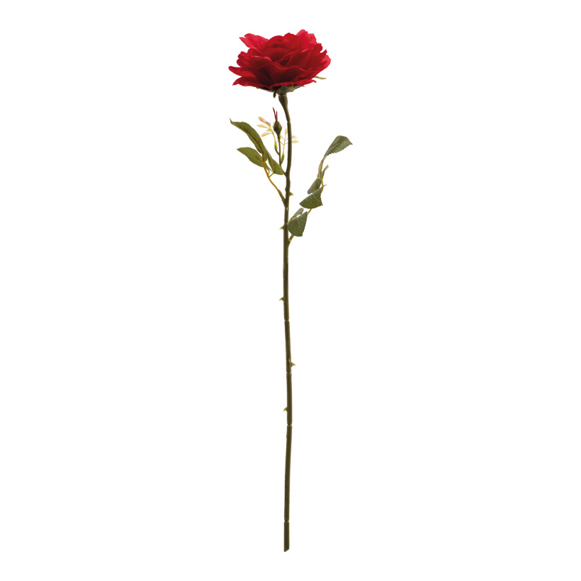 Rose, 60cm