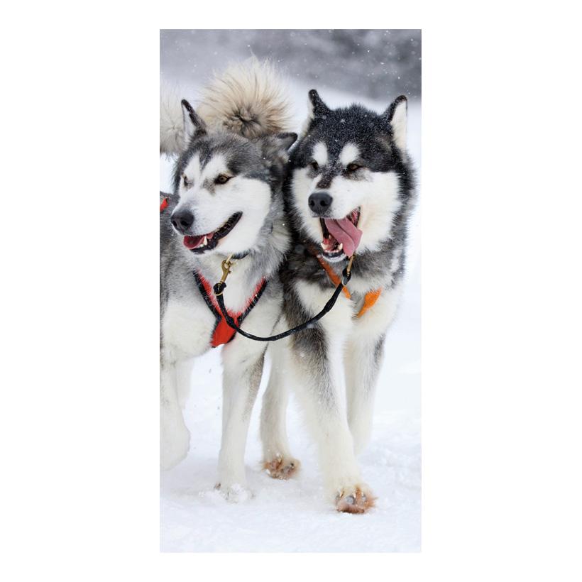 "# Motivdruck ""Huskies"" 180x90cm Papier"