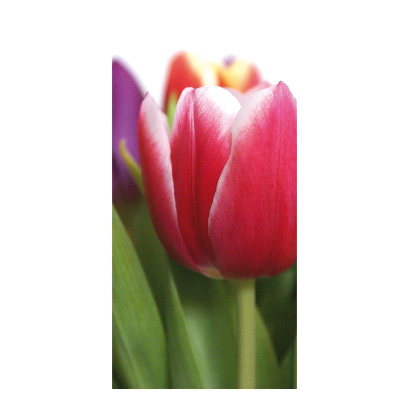 "# Motivdruck ""Tulpe"", 180x90cm Papier"