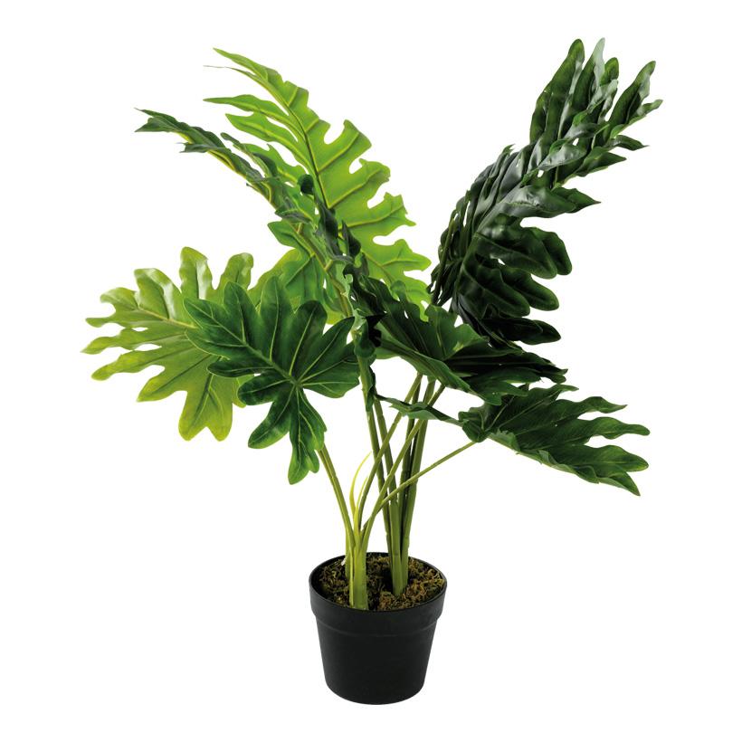 # Monstera Pflanze, 80cm mit Kunststoff Topf