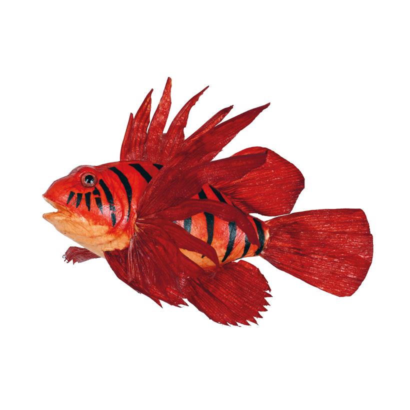Feuerfisch, 30cm mit Hänger